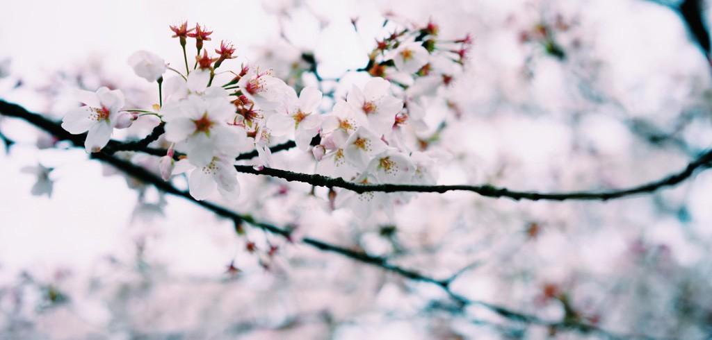 4月は出会いの季節! お花見などの注目婚活イベント[首都圏編]